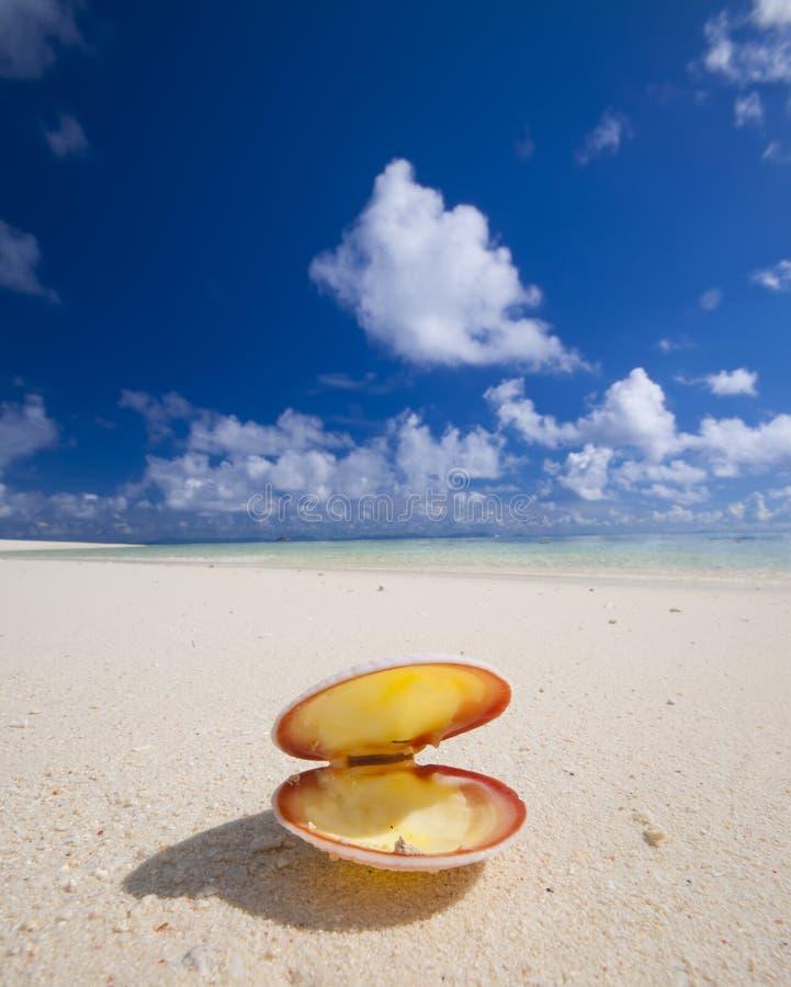 Seashell en la playa tropical fotografía de archivo libre de regalías