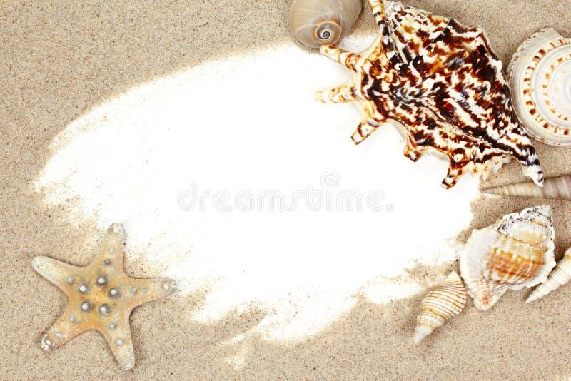 Seashell en marco de la playa de la arena imagen de archivo libre de regalías