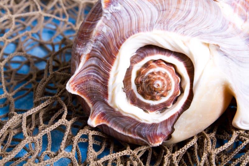Seashell en red de pesca foto de archivo libre de regalías