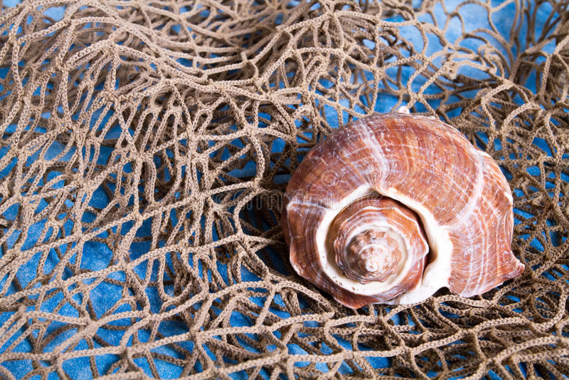 Seashell en red de pesca imágenes de archivo libres de regalías
