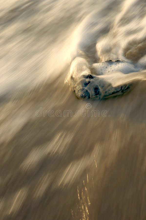Seashell en resaca imagen de archivo