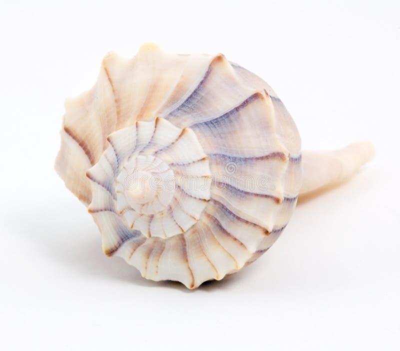 Seashell espiral de encontro ao branco imagens de stock royalty free