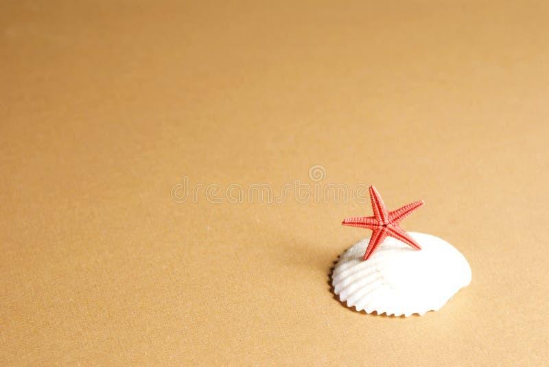 Seashell et étoiles de mer image libre de droits
