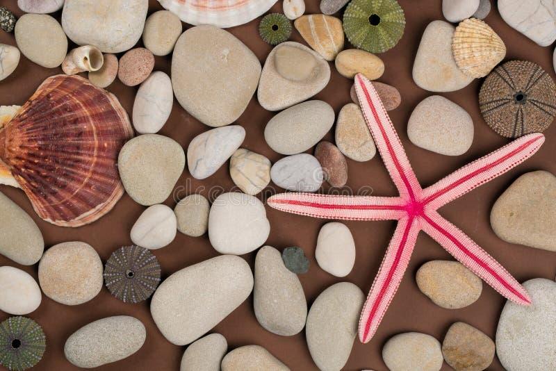 Seashell et étoiles de mer photos stock