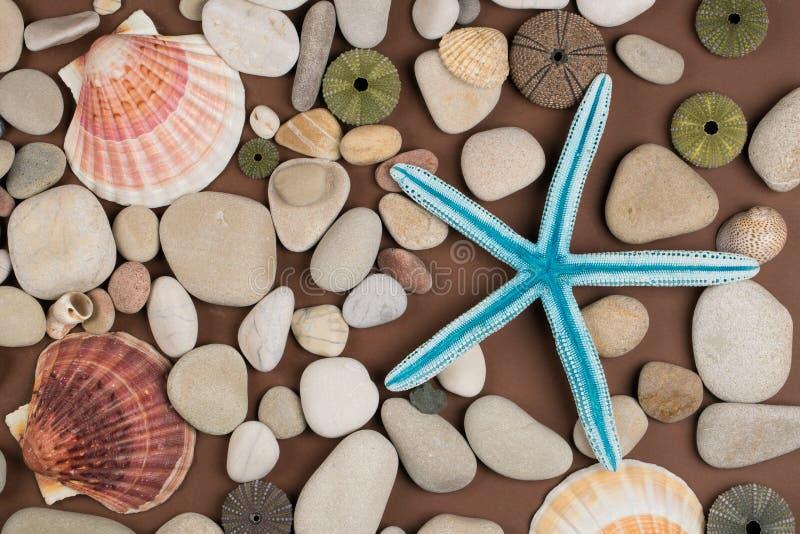 Seashell et étoiles de mer photo libre de droits
