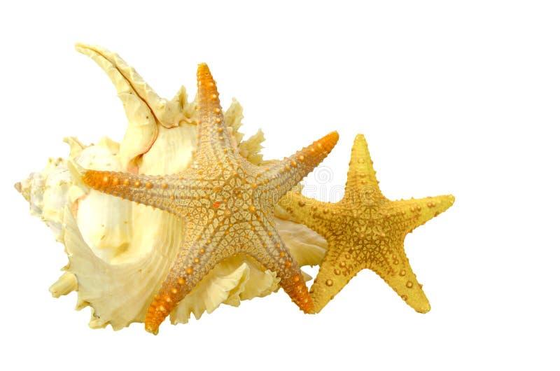 Seashell et étoiles de mer images libres de droits