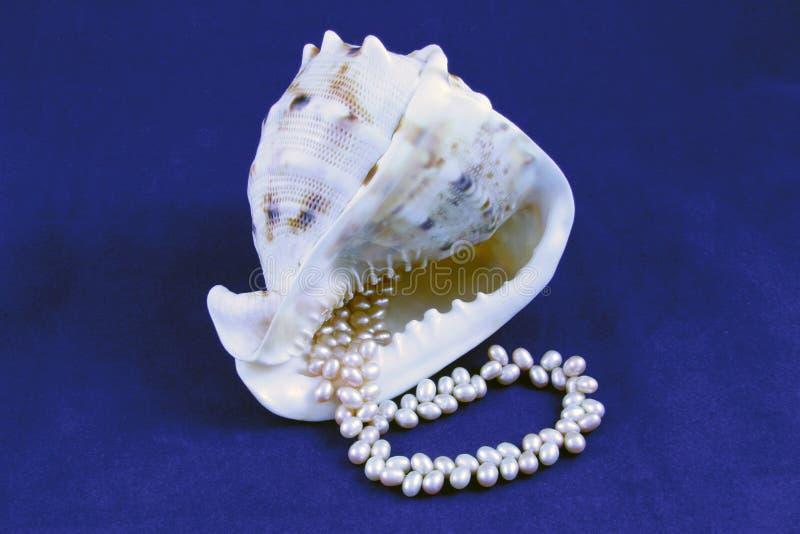 Seashell et perles image stock