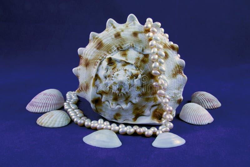 Seashell et perles photos libres de droits