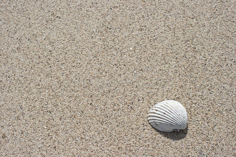 Seashell et sable photographie stock