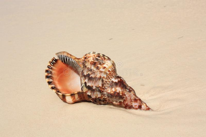 Seashell exotique photos stock