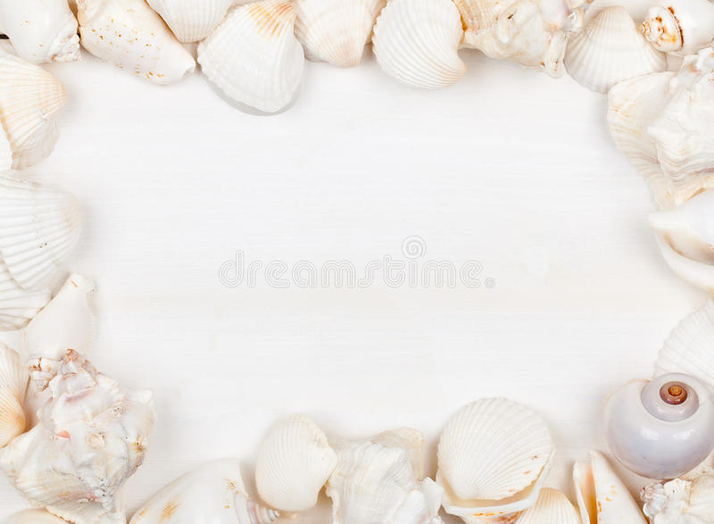 Download Seashell frame stock photo. Image of conch, exotic, holidays - 25142440