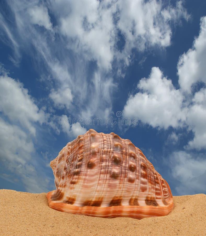 Seashell grande fotografía de archivo