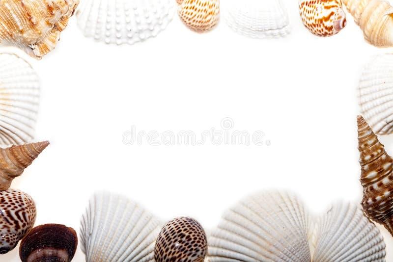 Seashell granica Rama asortowane denne skorupy Natury obwódka obrazy stock