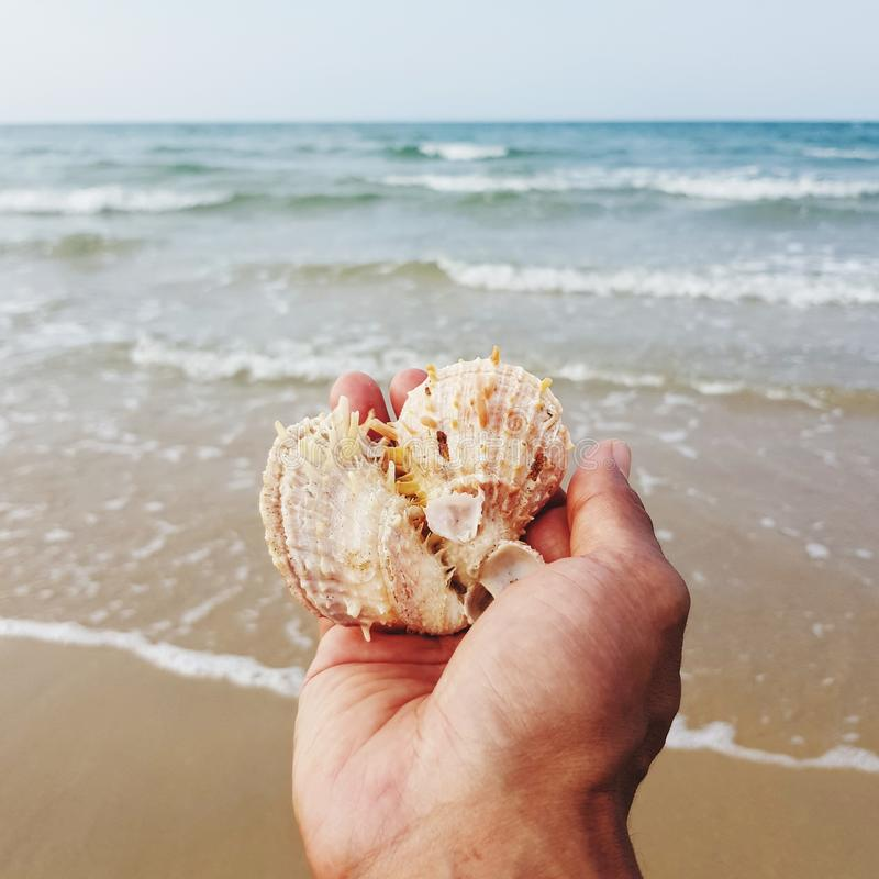 Seashell on hand at beach. Animal, seashore, coast, ocean, island, hands, holding, relaxing, leisure-activities, summer, holiday, vacation, traveling, tourism stock photo