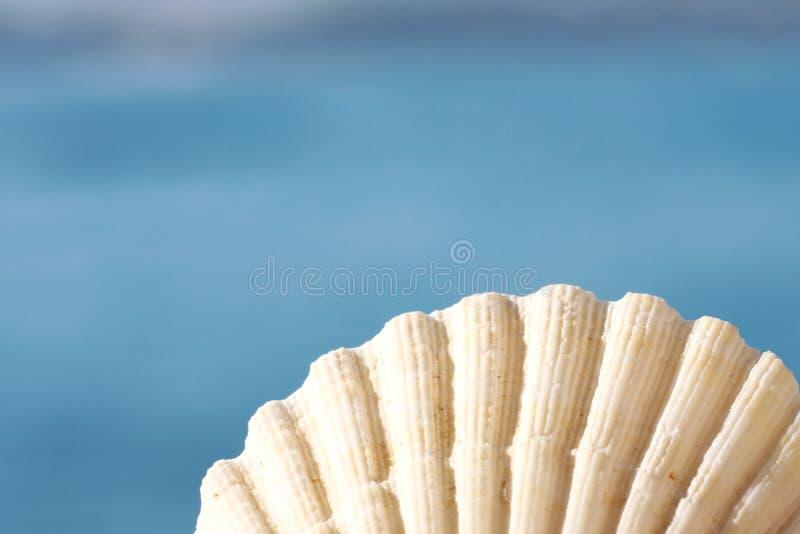 Seashell hermoso imagenes de archivo