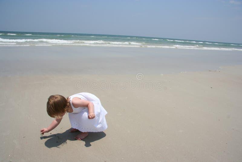 Seashell hunt stock photography