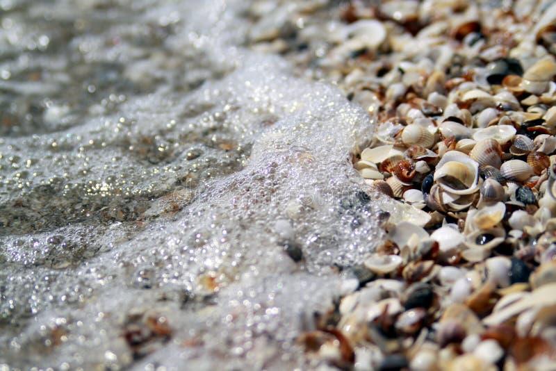 Seashell i fala tła zdjęcie stock