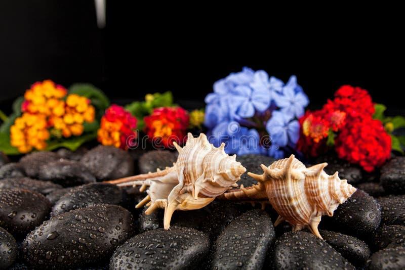 Seashell i kwiaty na czerń kamieniu, stosownym dla tła zdjęcie royalty free