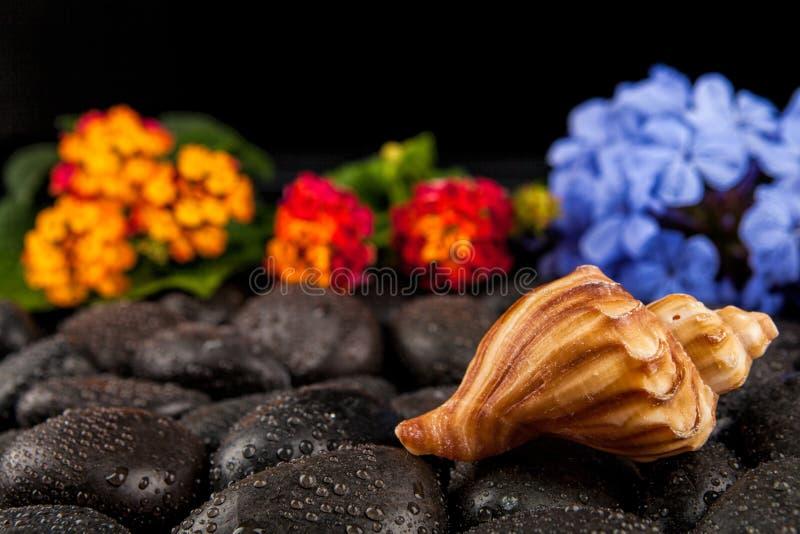 Seashell i kwiaty na czerń kamieniu, stosownym dla tła obraz royalty free