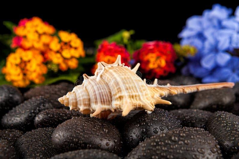 Seashell i kwiaty na czerń kamieniu, stosownym dla tła fotografia royalty free