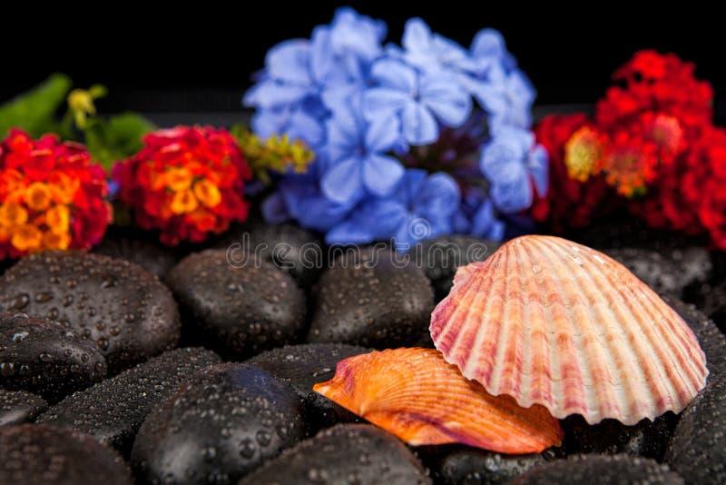 Seashell i kwiaty na czerń kamieniu, stosownym dla tła zdjęcia stock