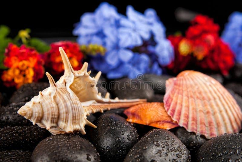 Seashell i kwiaty na czerń kamieniu, stosownym dla tła fotografia stock