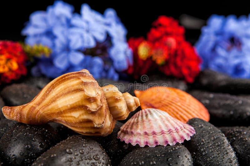 Seashell i kwiaty na czerń kamieniu, stosownym dla tła obrazy stock