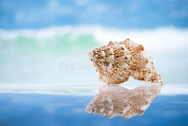 Seashell i odbicie z oceanem, fala i seascape, obrazy stock
