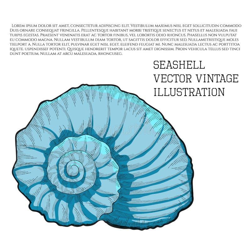 seashell A ilustração do vintage do vetor estilizou como o gráfico desenhado à mão do esboço com choque ilustração royalty free