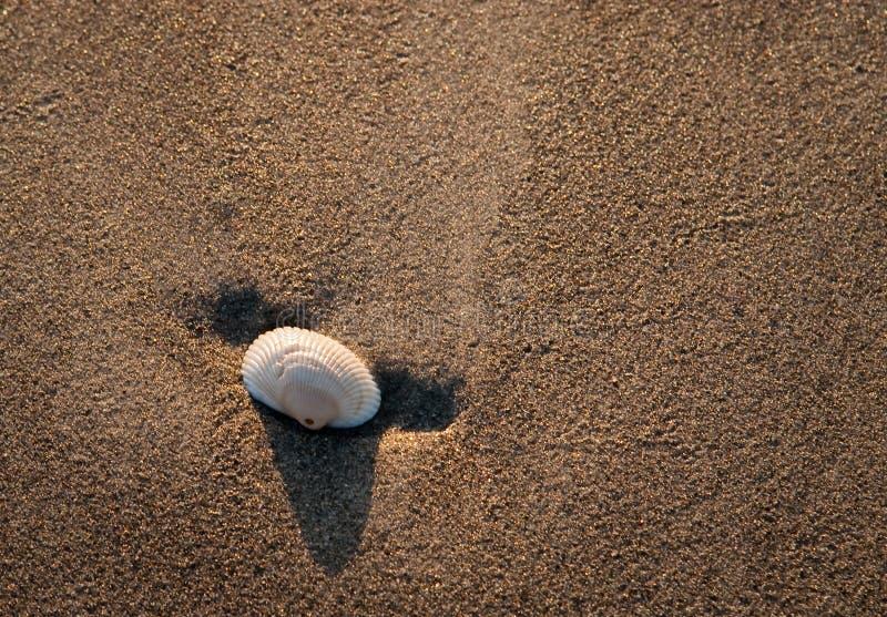 Seashell im Sand lizenzfreies stockfoto