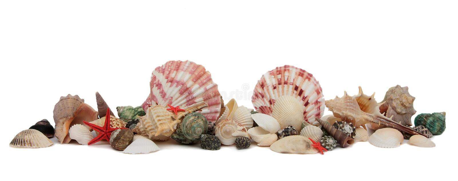 Seashell isolado no fundo branco fotografia de stock royalty free