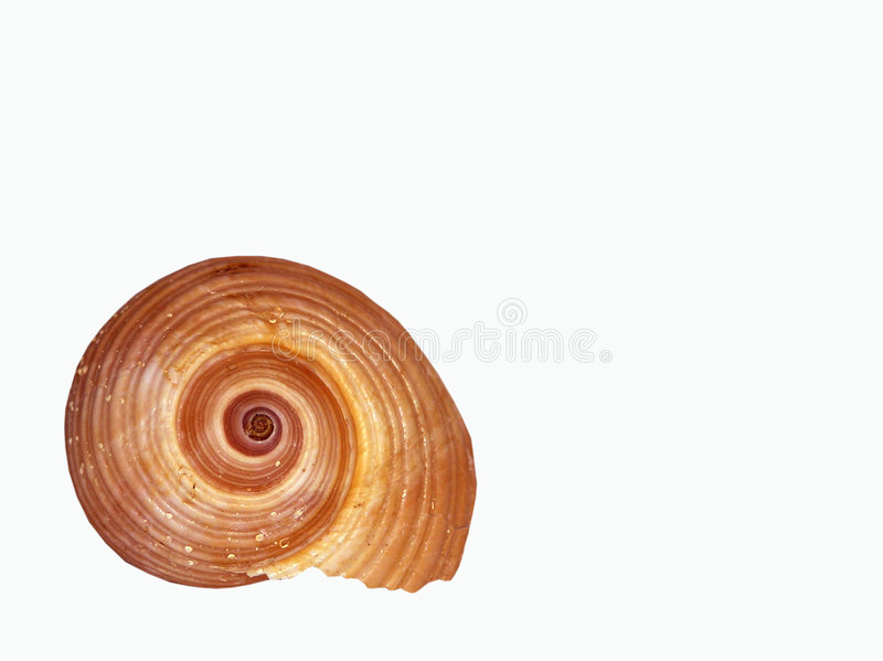 Seashell isolated stock photography