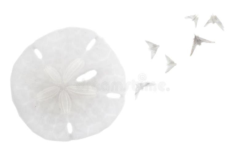 Seashell isolated on white royalty free stock photos