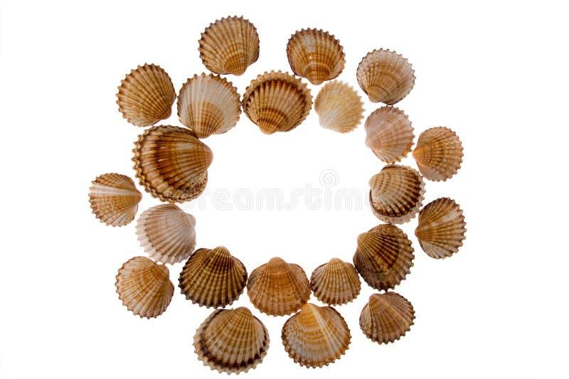 Seashell - marco en blanco fotografía de archivo