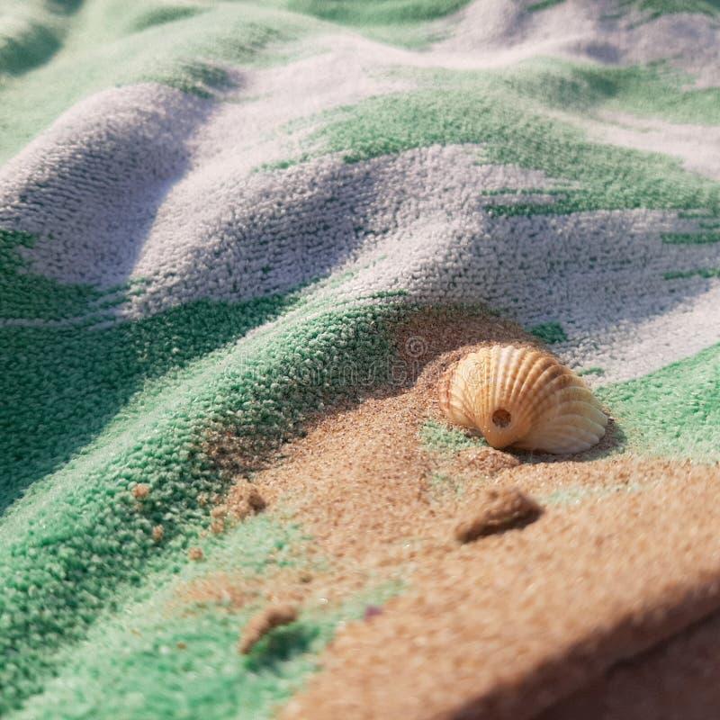 seashell stockfotos