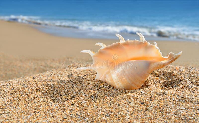 Seashell na żółtym plażowym piasku obraz stock