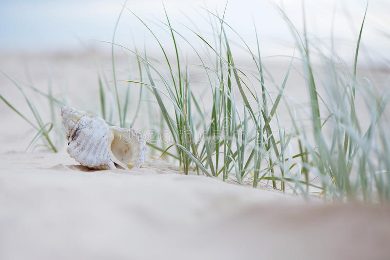 Seashell na areia fotografia de stock royalty free
