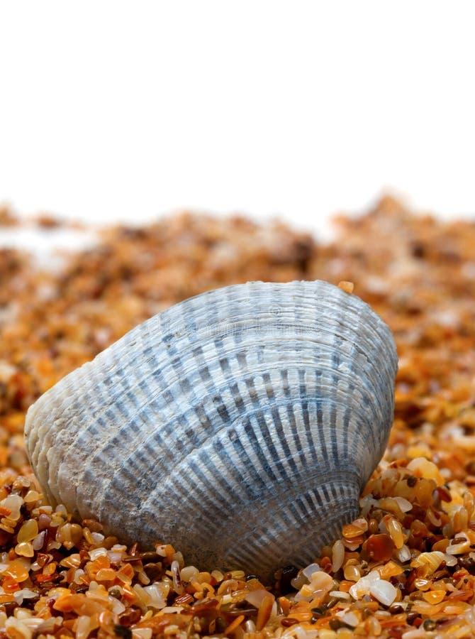 Seashell na areia foto de stock