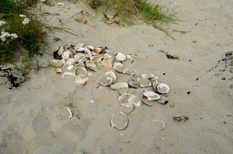 Seashell na białej piaskowatej lato plaży fotografia stock
