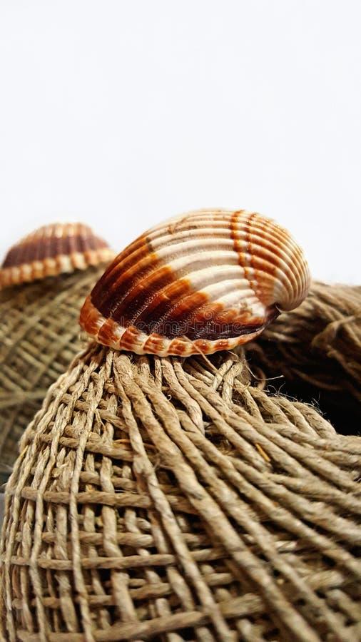 Seashell na konopie sznurku zdjęcie stock
