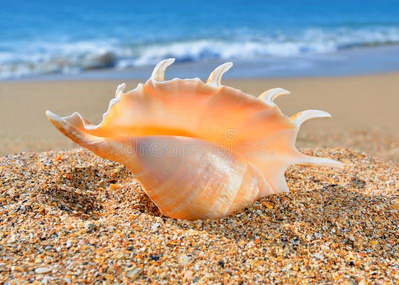 Seashell na plaży fotografia royalty free
