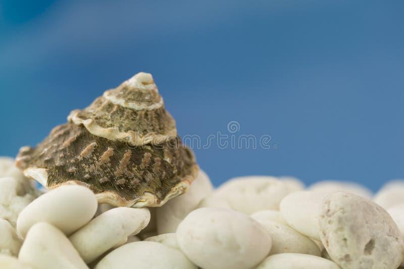 Seashell na plaży zdjęcie royalty free