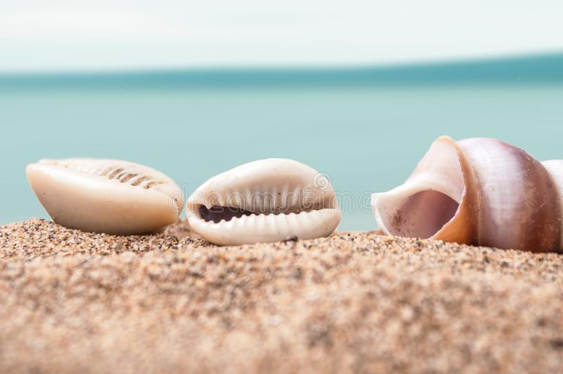 Seashell na plaży z błękitnym oceanem na tle obrazy stock