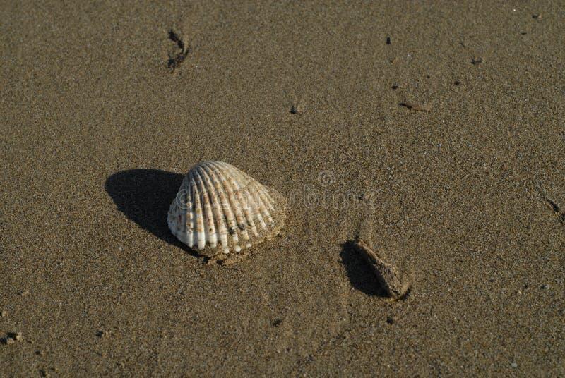 Seashell na pla?y zdjęcia stock