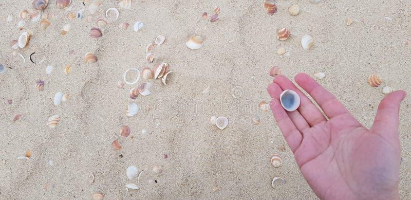 Seashell na ręki palmie przeciw piaskowatej plaży tłu obraz royalty free