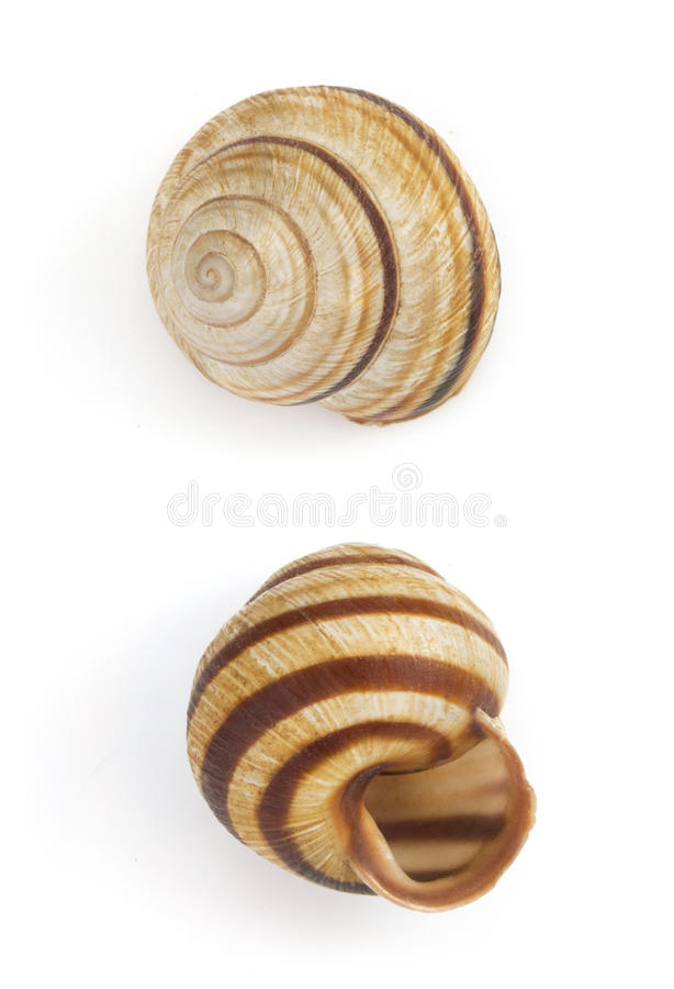 Seashell no fundo branco fotografia de stock royalty free
