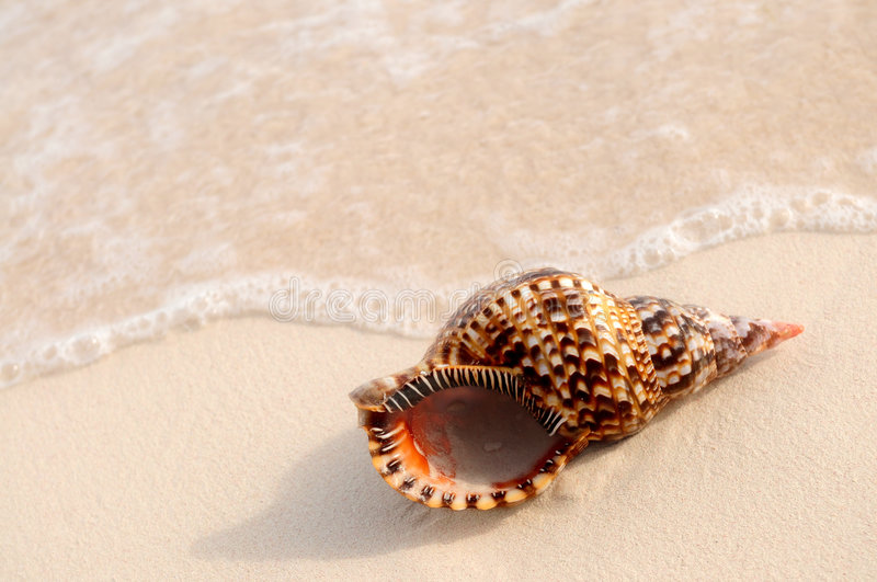 Seashell and ocean wave royalty free stock photo