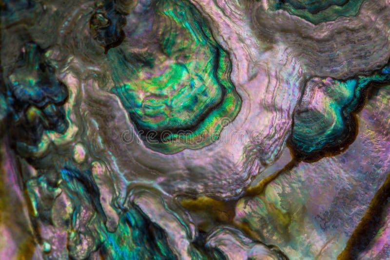 Seashell od inside fotografia royalty free