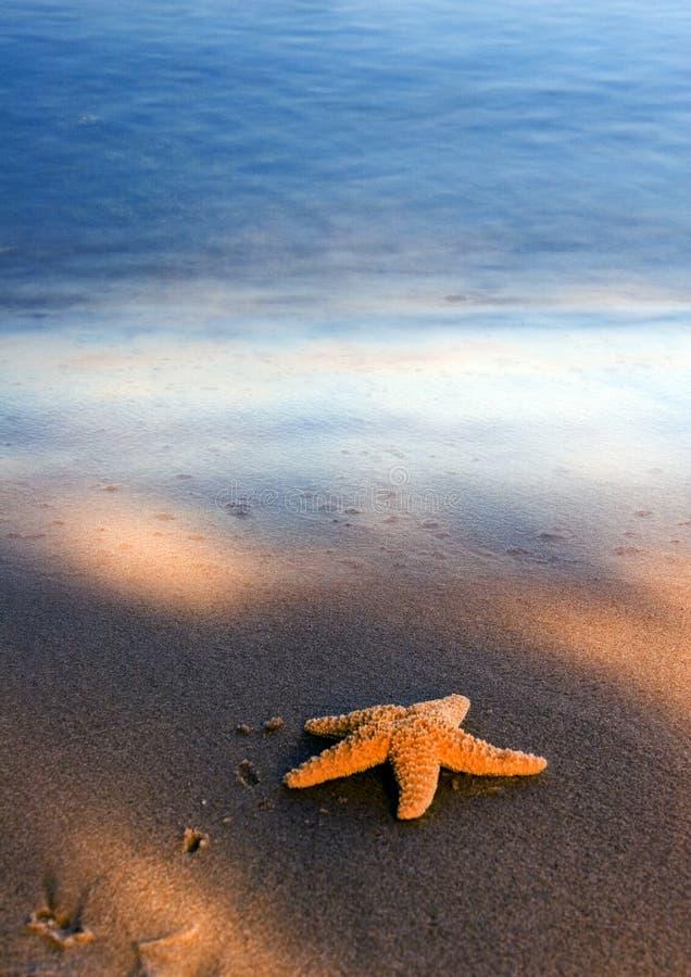 Free Seashell On The Beach Stock Image - 2335801