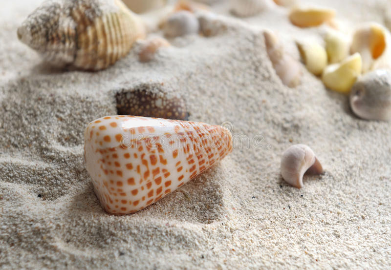 Seashell. Pearly seashell in the sand royalty free stock photos